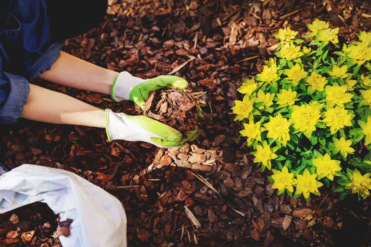 Why You Should Be Winter Mulching and How to Do it Right