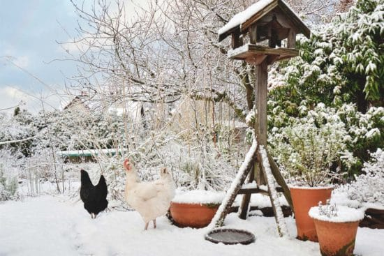 Winter Homesteading Activities To Fill Your Freezing Cold Days