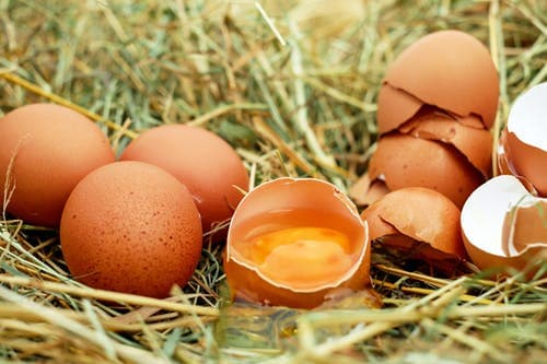 Broken eggs can lead to chickens eating their own eggs