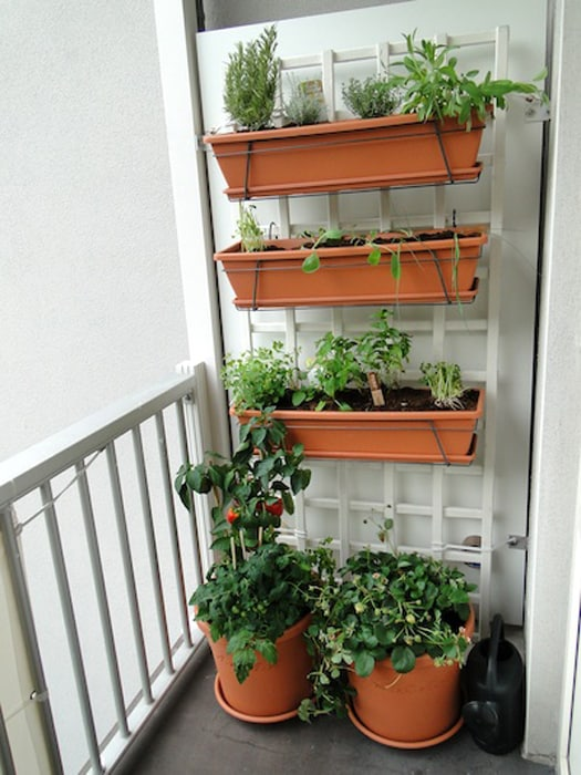 indoor vertical garden on a balcony