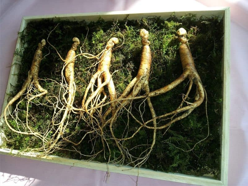 Ginseng is one of the most profitable crops