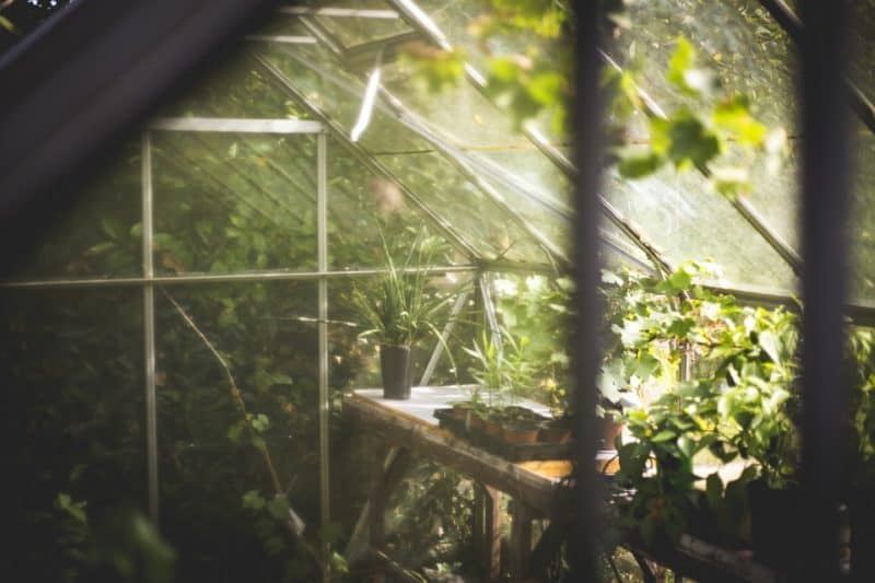 You can use your greenhouse to grow some of the most profitable crops