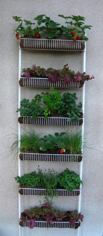 indoor vertical garden herbs and spices