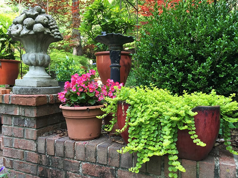 container gardening for seniors