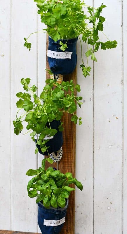 old jeans indoor vertical garden