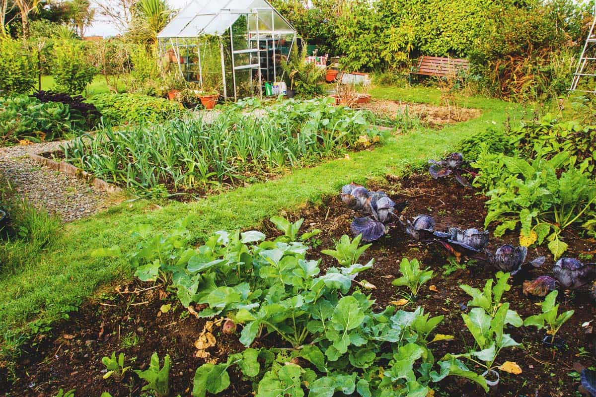 14 Tips for Managing a Large Garden with Minimal Work
