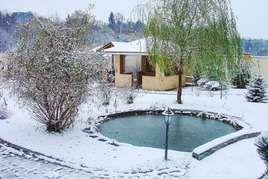 Winterizing Water Gardens and How to Keep Them Healthy all Winter Long