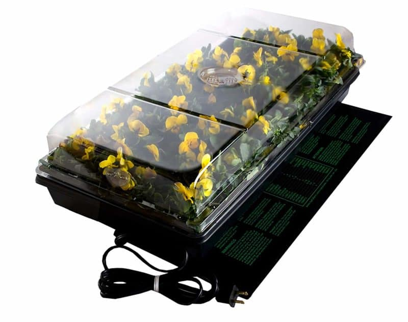 Bonsai Outlet Seed Germination Station