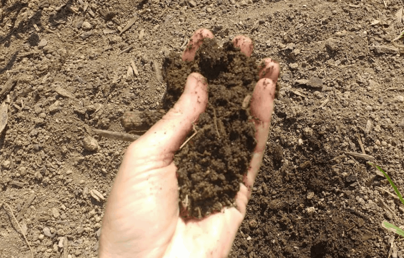 soil to consider when doing plant selection