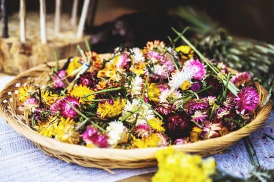 The Best Methods for Drying Flowers and Which Plants Work Best