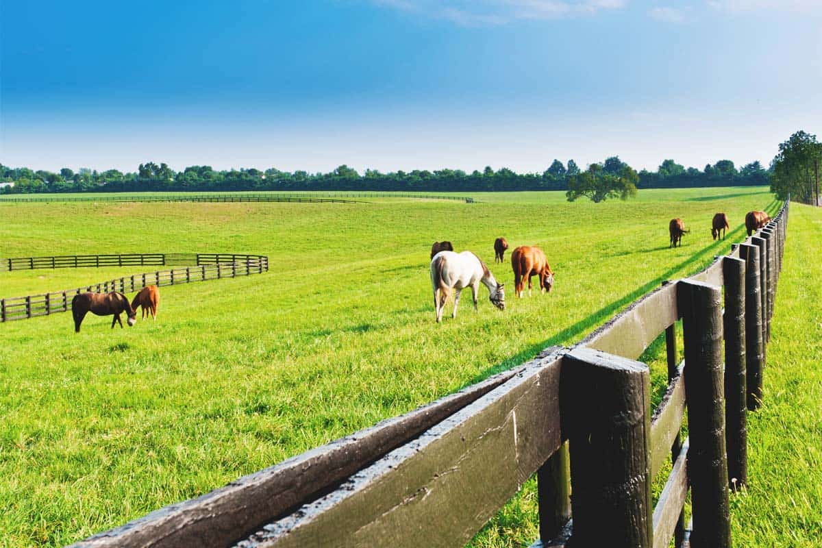 Tips on Building a Strong Farm Fence That Will Last a Lifetime