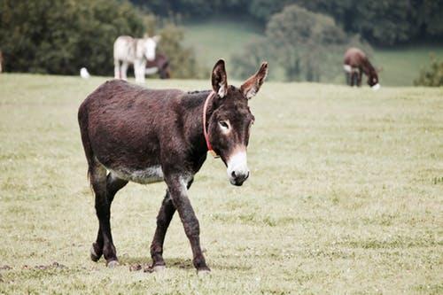 guardian-donkey as a LGA