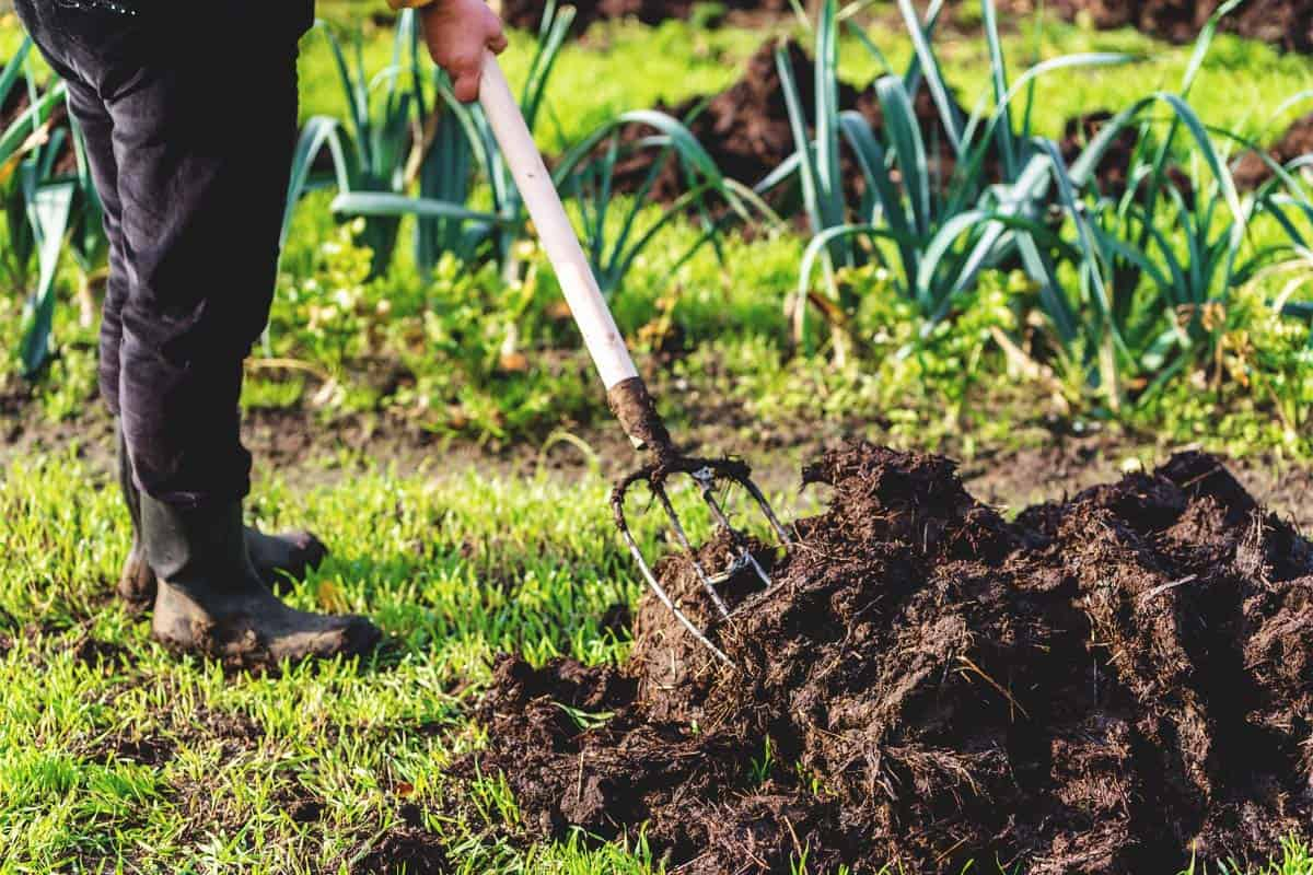 10 Tips on Long-Term Garden Care for More Productivity