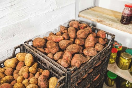 A Beginner's Guide to Creating a Root Cellar Garden