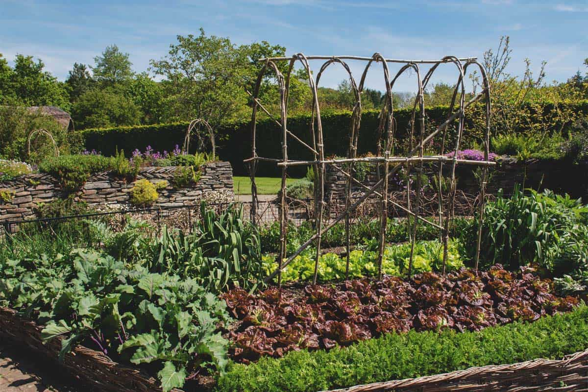 How to Start a Homestead While Living on Rented Land