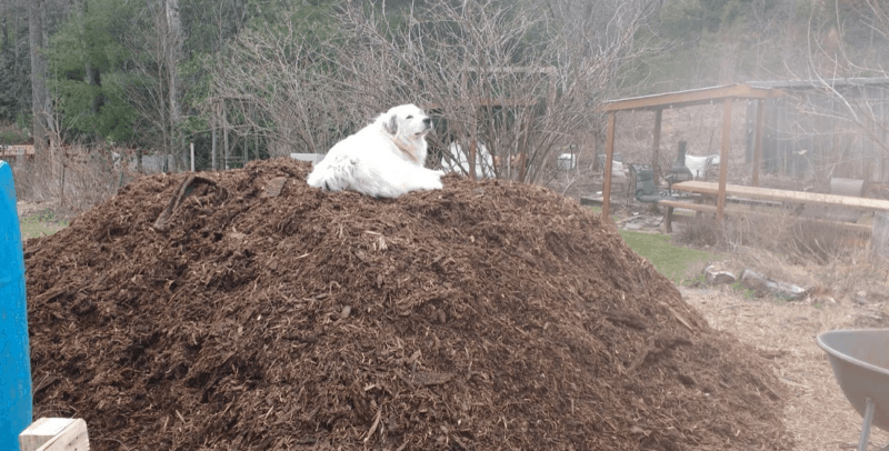 Apply wood chips to your long term garden care