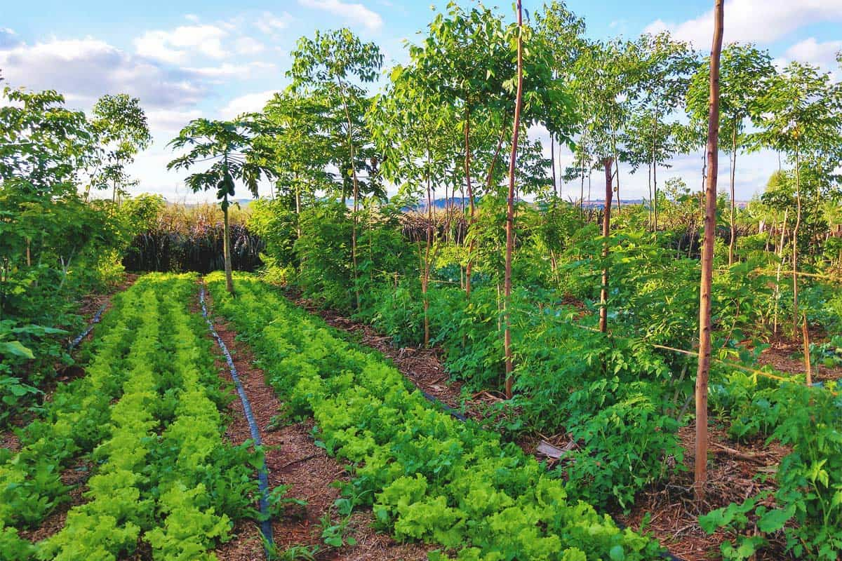 Regenerative Agriculture: What Is It and How to Use It in Your Garden