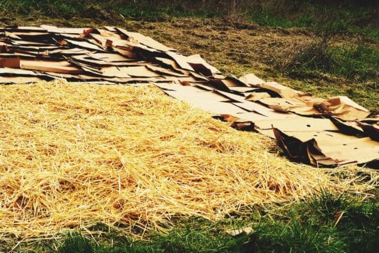 Sheet Mulching: A Quick Guide to Getting Started