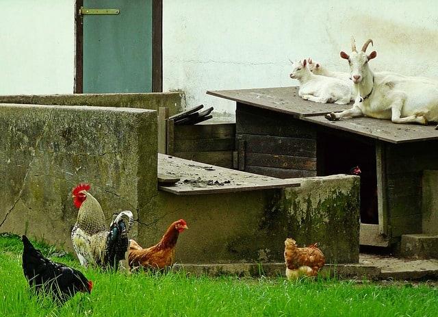 enjoy your homestead despite the COVID-19 virus