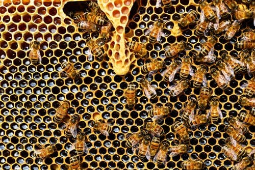 checking on the queen is part of the honey bee spring chores