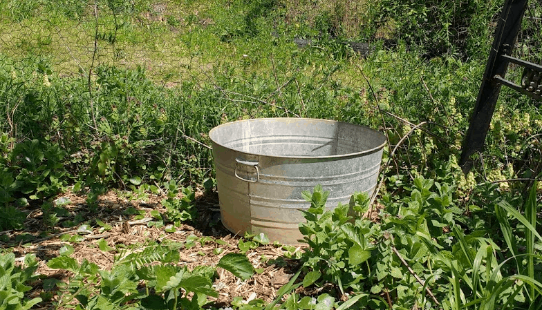 Containers are also good for growing potatoes, but the soil must be kept cool