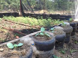 gardening in tires can provide you with additional structure for your raised beds