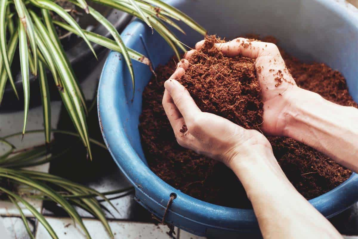 The Best Organic Growing Media Using Cocopeat