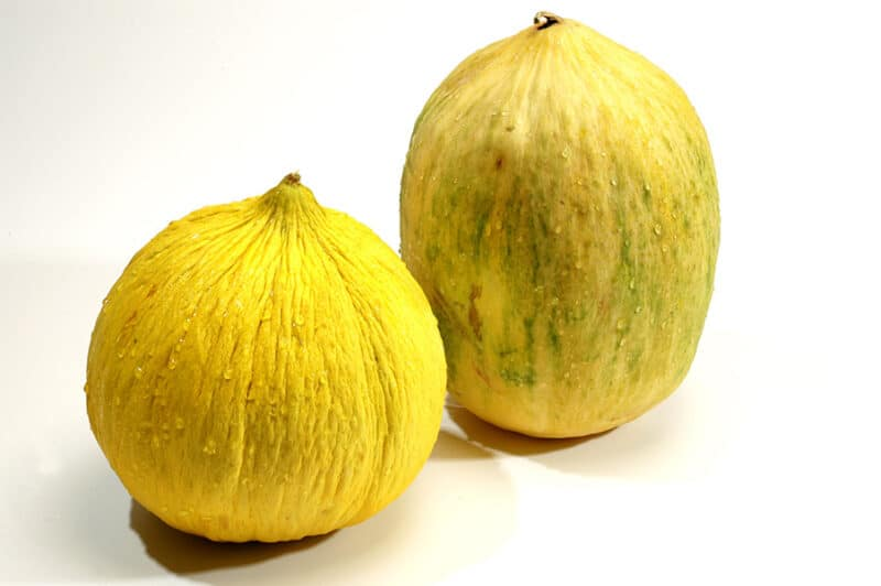 Growing Melons: Varieties, Planting Guide, Care, Problems and Harvest