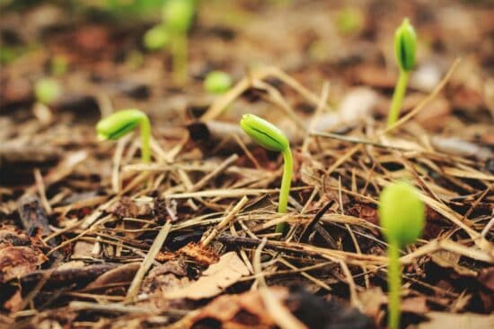 Seeds Not Germinating? 12 Causes and Things to Watch For