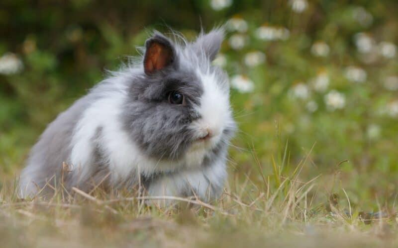 fiber rabbits
