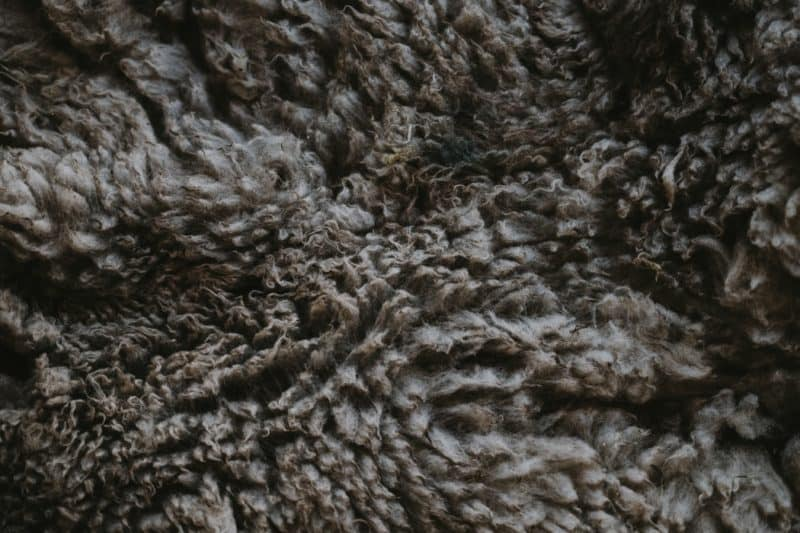 uses for wool includes filling furniture and pillows