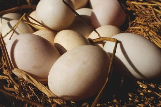 How Many Chickens Should You Raise for Eggs