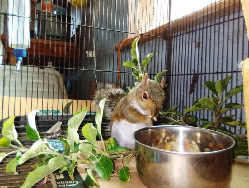 https://www.foxrunenvironmentaleducationcenter.org/new-blog/2019/12/28/the-industrious-squirrel