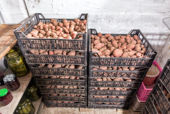 How to Store Potatoes to Make Them Last for Months