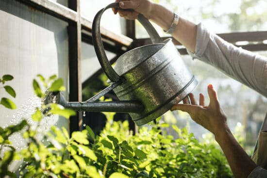 How to Water Plants in Your Greenhouse