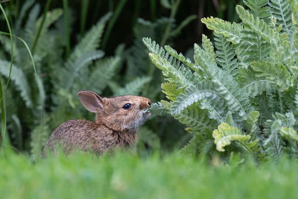 29 Rabbit-Resistant Plants That Rabbits Won't Eat in Your Garden