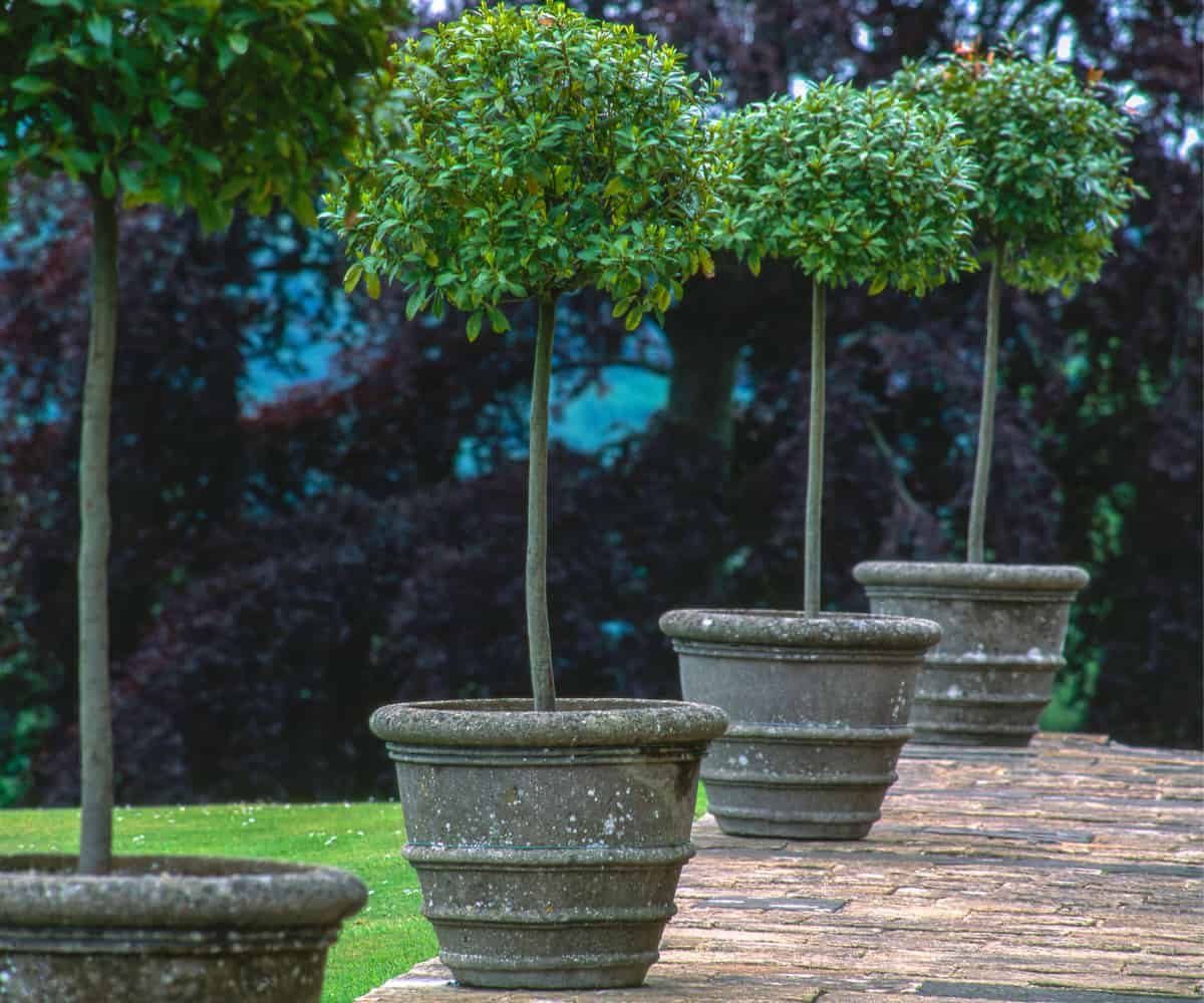 How To Grow And Train Your Own Topiary Plants