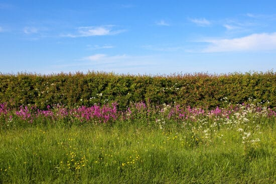 How and Why You Should Add a Hedgerow to Your Farm