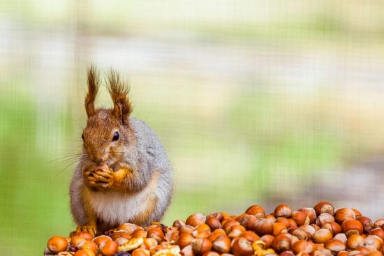 The Right Way to Feed Wildlife in the Winter