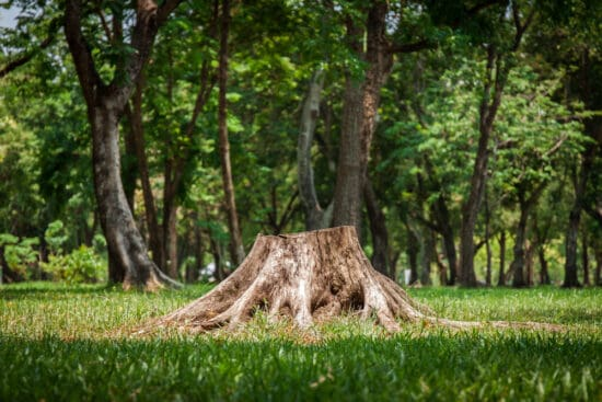 6 Tree Stump Removal Options to Get Rid of Stumps  Painlessly