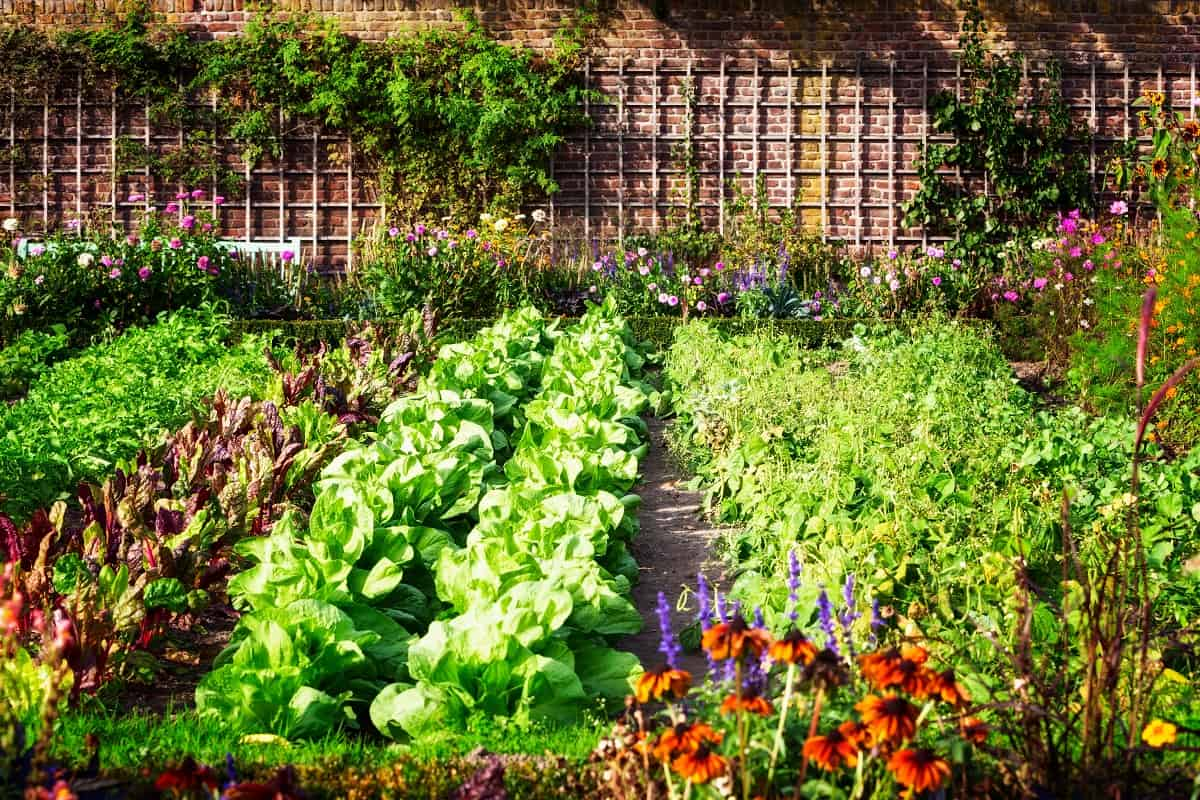 """What Is Intensive Planting and When Is """"Overcrowding"""" Acceptable?"""