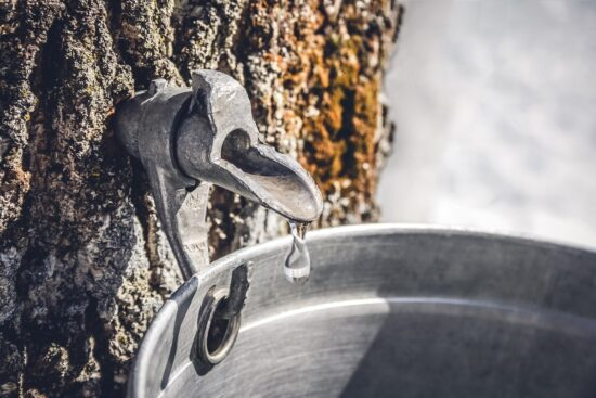 15 Trees To Tap for Syrup Besides the Sugar Maple