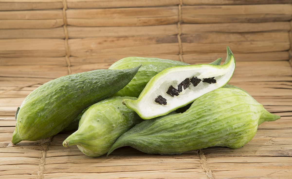 Growing Caigua: Planting, Raising, and Using Slipper Gourd