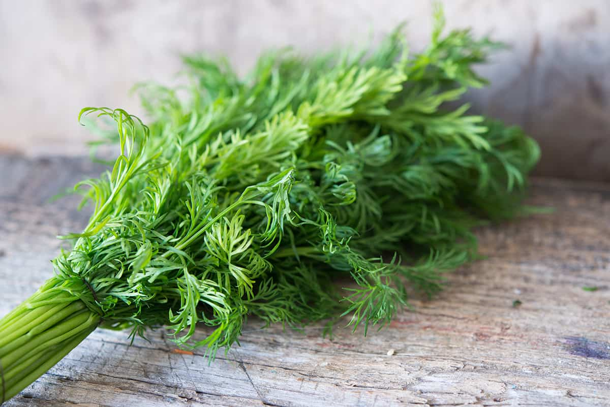 Growing Herb Fennel: The Complete Guide to Plant, Care, and Harvest