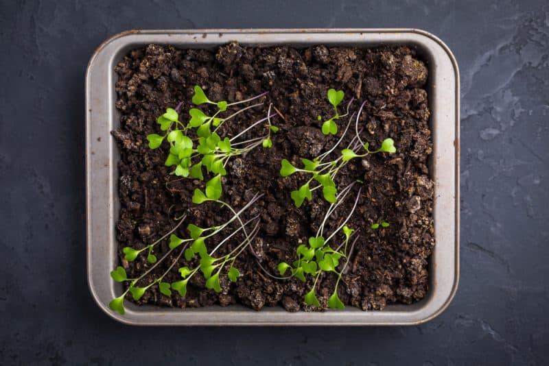 How To Fix Leggy Seedlings
