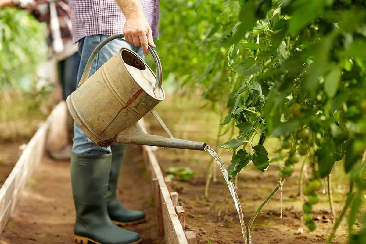 Soil Drenching: How and Why You Should Be Using This Simple Technique
