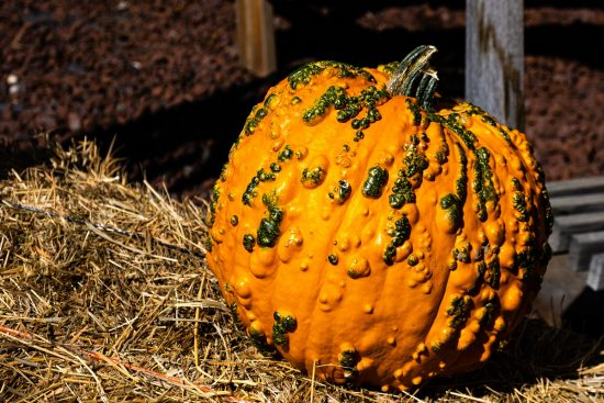 What Is Pumpkin Mosaic Virus and How to Best Prevent & Treat It