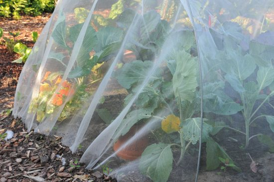Horticultural Fleece: What It Is and How to Use It