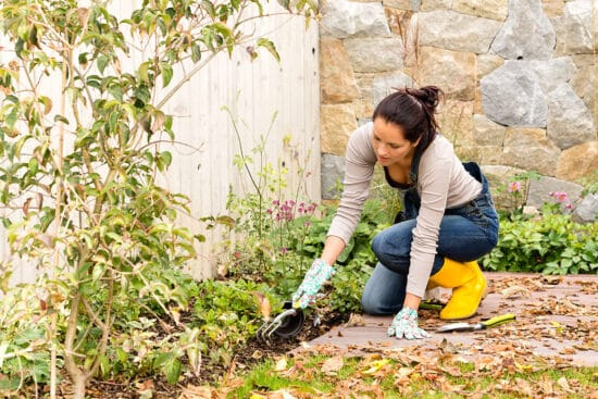 Why You Should Leave Plant Debris in the Garden This Fall